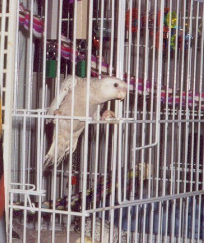 If your bird can do this, your bar spacing is too wide.  Click to enlarge.