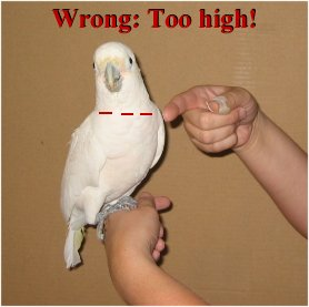 Wrong:  hand is much too high.