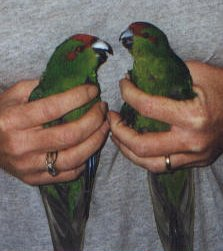 Male (left) and Female (right).